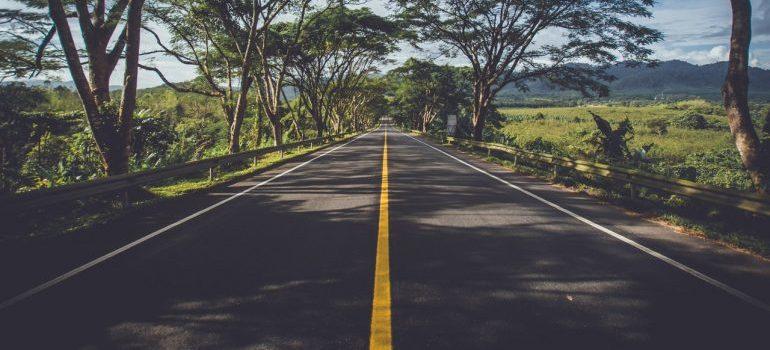 A road between trees.