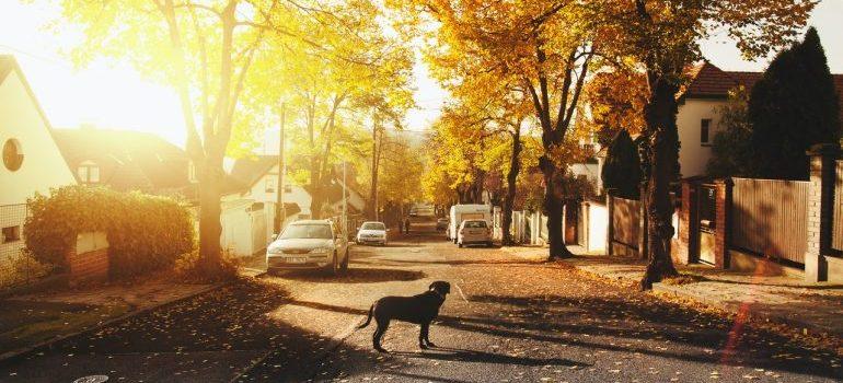 Dog on the street in autumn