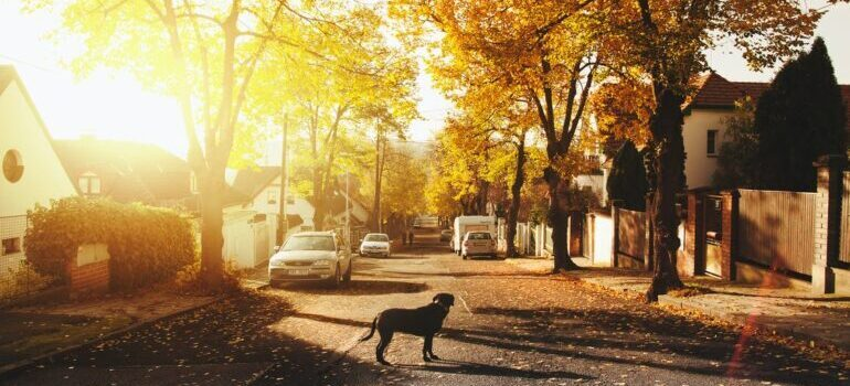 Dog on the street of one neighborhood as the appeal of living in White Plains is family-friendly neighborhoods
